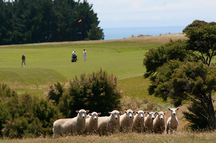 <strong>CAPE KIDNAPPERS<span><b>view larger</b></span></strong><i>→</i>